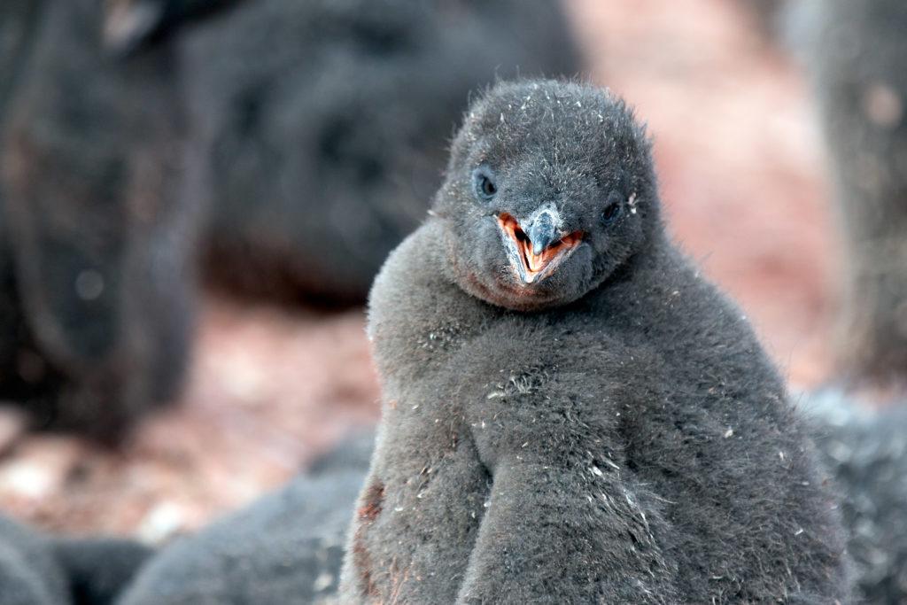 Antarctica 2020
